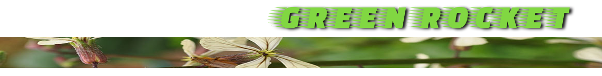 Green Rocket Courses